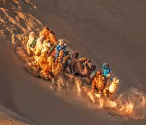 PhotoVivo Gold Medal - Juanjuan Shen (China)  Desert Passion