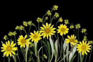PhotoVivo Honor Mention e-certificate - Sa Kim Tran (USA)  Wild Flowers  310