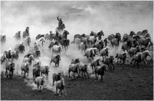 PhotoVivo Gold Medal - Huijun Liang (China)  Life Of Herdsman