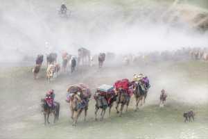 PSA HM Ribbons - Li Sun (China)  Camels