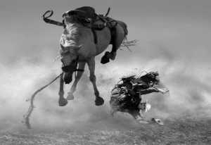 RPST Honor Ribbon - Yanping Qiu (Hong Kong)  Fall Of The Horse
