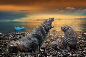 PhotoVivo Gold Medal - Tony Chi Keung Au Yeong (Hong Kong)  Fur Seals
