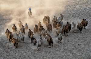 Circuit Merit Award e-certificate - Betty Chan (Canada)  Rounding Up Camels