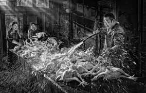 PSA Gold Medal - Yuk Fung Garius Hung (Hong Kong)  Rinse And Shine