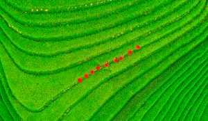 APAS Honor Mention e-certificate - Jun Zhao (China)  Autumn Harvest Of Yao