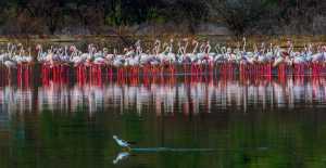 SIPC Silver Medal - Shengdong Liu (China)  Flamingos