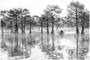 APAS Gold Medal - Thomas Lang (USA)  Sailing In The Wetlands
