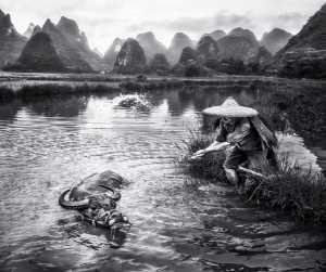 PhotoVivo Gold Medal - Hsiang Hui (Sylvester) Wong (Malaysia)  Buffalo & Me