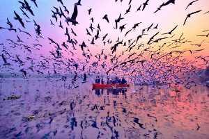 Honor Mention - Apratim Pal (India)  Morning Vibes