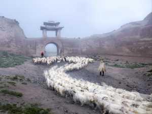 ICPE Gold Medal - Jun Ye (China)  Sheep