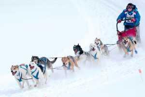 Circuit Merit E-cert - Peter Lee (Canada)  Dog Sled Race D10