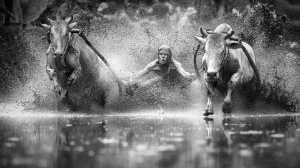 ICPE Gold Medal - Chan Ieong Tam (Macau)  Bull Race6