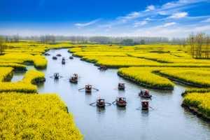 Golden Dragon Photo Award - Limin Wu (China) - River Through The Flowers
