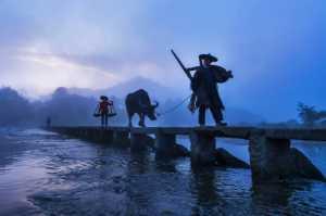 PhotoVivo Gold Medal - Xinmin Zhang (China)  Herd Back 3