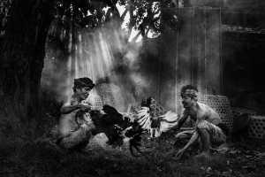 APAS Gold Medal - Tirta Widjaya (Indonesia)  Cock Fighting
