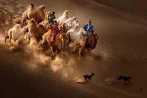APU Winter Merit Award E-Certificate - Xiping An (China)  Camel Dog