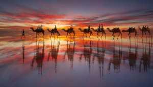 ICPE Gold Medal - Shengfu Jiao (China)  Camel Shadow