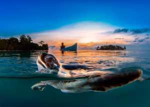 PhotoVivo Gold Medal - Sofi Aida Sugiharto (Indonesia)  Sunset With Turtle
