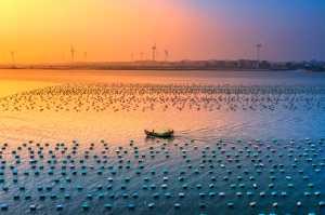 PhotoVivo Gold Medal - Rongmao Yang (China)  Golden Sea