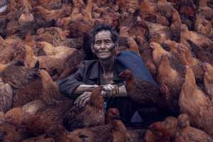 APAS Honor Mention e-certificate - Lin You (China)  The Yi People Who Sell Chickens