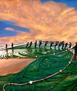 PhotoVivo Gold Medal - Tong Hu (China)  Haut The Net