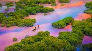 FIP Ribbon - Rongmao Yang (China)  Colorful Xiapu 12