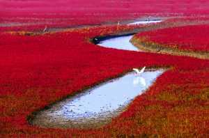 PhotoVivo Gold Medal - Liu Xiu (China)  Red Memories