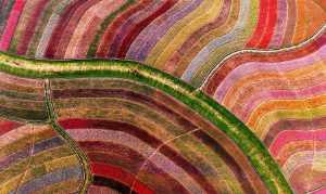 PhotoVivo Gold Medal - Guomei Yang (China)  Color Waves