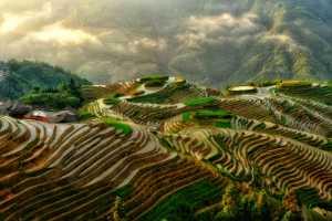 APU Honor Mention e-certificate - Hartono Wijaya (Indonesia)  Rice Field Terrasering