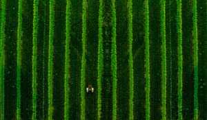 PhotoVivo Gold Medal - Chaohong Wang (China)  Spring Ploughing