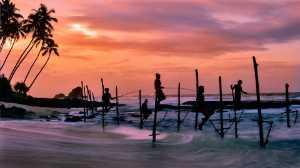 PhotoVivo Honor Mention e-certificate - Xiaolian Zhang (China)  Sea Fishing