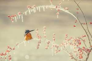 PhotoVivo Gold Medal - Jianjun Liu (China)  Cute Bird