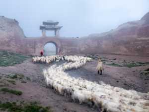 Circuit Merit Award e-certificate - Jun Ye (China)  Sheep