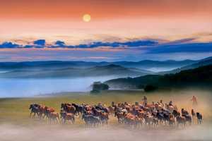 PhotoVivo Honor Mention e-certificate - Yanbin Wang (China)  Benz