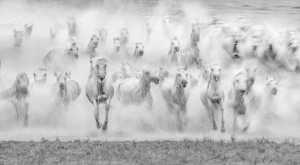 APAS Gold Medal - Jing Li (China)  Gallop Horse 3