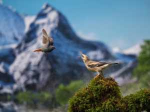 PhotoVivo Gold Medal - Yakang Ai (China)  In The Mountain