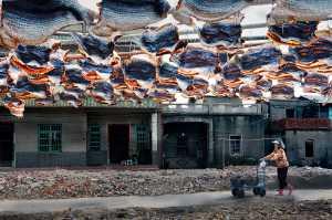APU Spring Honor Mention E-Certificate - Jui-Ching Tai (Taiwan)  Dried Fish