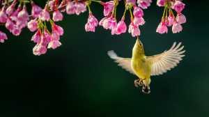 RPST Honor Ribbon - Qiuqing Mu (China)  Get Nectar