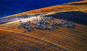 APU Honor Mention e-certificate - Yanbin Wang (China)  Fall Ranch