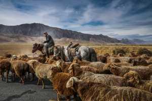 PhotoVivo Gold Medal - Wei Gong (China)  Sheeps