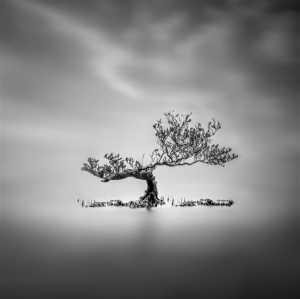 APU Gold Medal - Hsiang Hui Sylvester Wong (Malaysia)  Tree Of Life