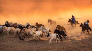 PhotoVivo Gold Medal - Yiliang Yang (China)  Lasso A Horse 4