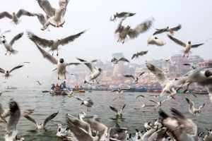 PhotoVivo Gold Medal - Ming Li (China)  Jubilant Ganges