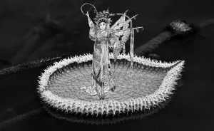 PhotoVivo Gold Medal - Chin Foo See (Singapore)  Lotus And Opera Lady Ii Bw