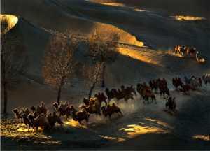 PhotoVivo Gold Medal - Daming Liang (China)  Camels In Desert