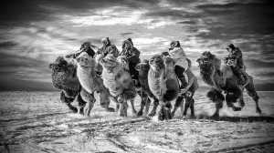 APU Winter Merit Award E-Certificate - Hugo Chan (USA)  Camels Running