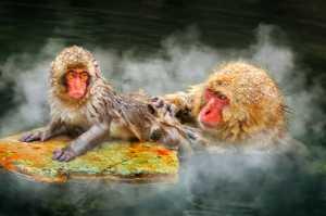 Circuit Merit Award e-certificate - Ka Yi Winnie Tse (Hong Kong)  Monkey Bath