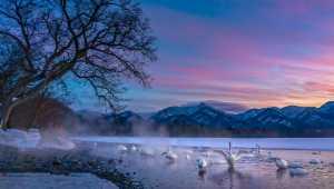 APU Gold Medal - Katherine Wong (Canada)  Sunset At Swan Lake