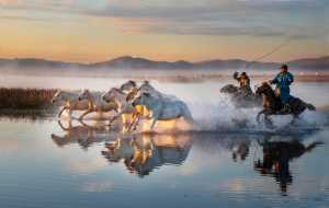 PhotoVivo Honor Mention e-certificate - Phillip Kwan (Canada)  Horses In Water 95