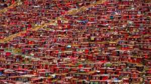 Circuit Merit Award e-certificate - Wei Wang (China)  Red House